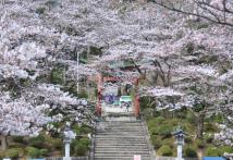 s-AIR-桜_9473.jpg