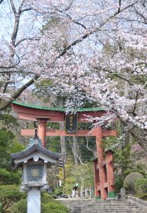 s-AIR-桜_9498.jpg