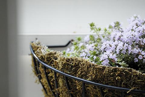 紫の植物.jpg