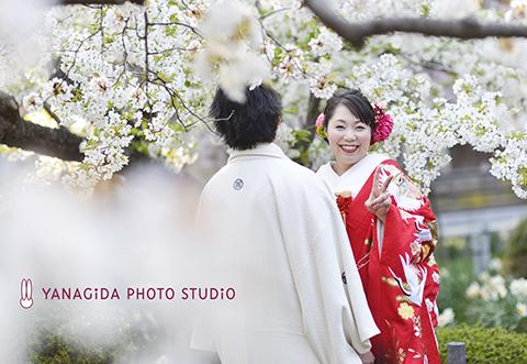 花嫁 桜.JPG