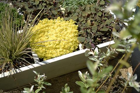 黄色の植物.jpg