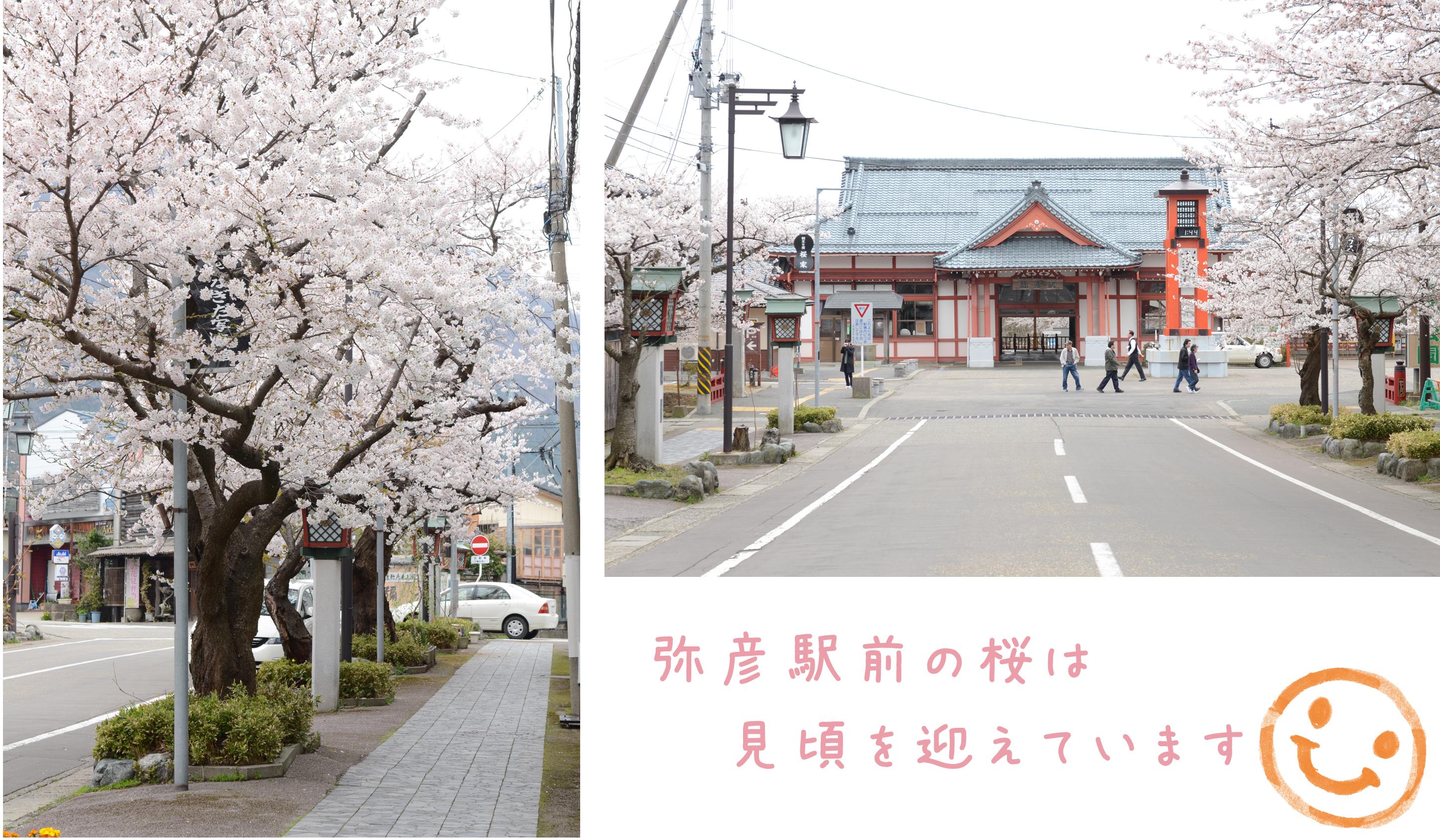 130416桜.jpg
