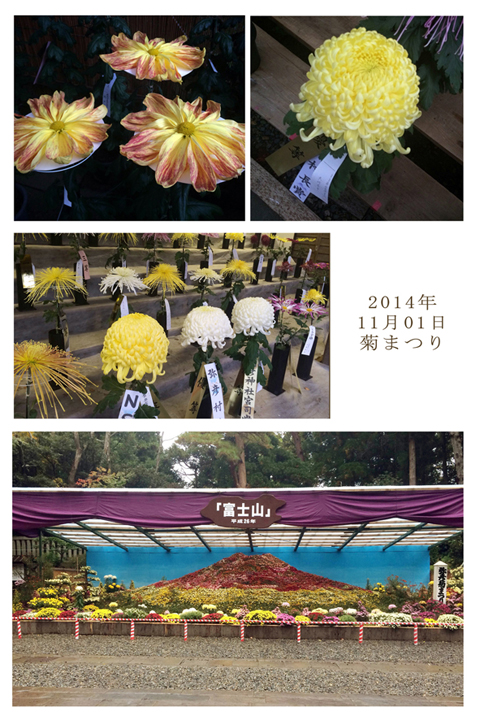 菊まつり 4.jpg